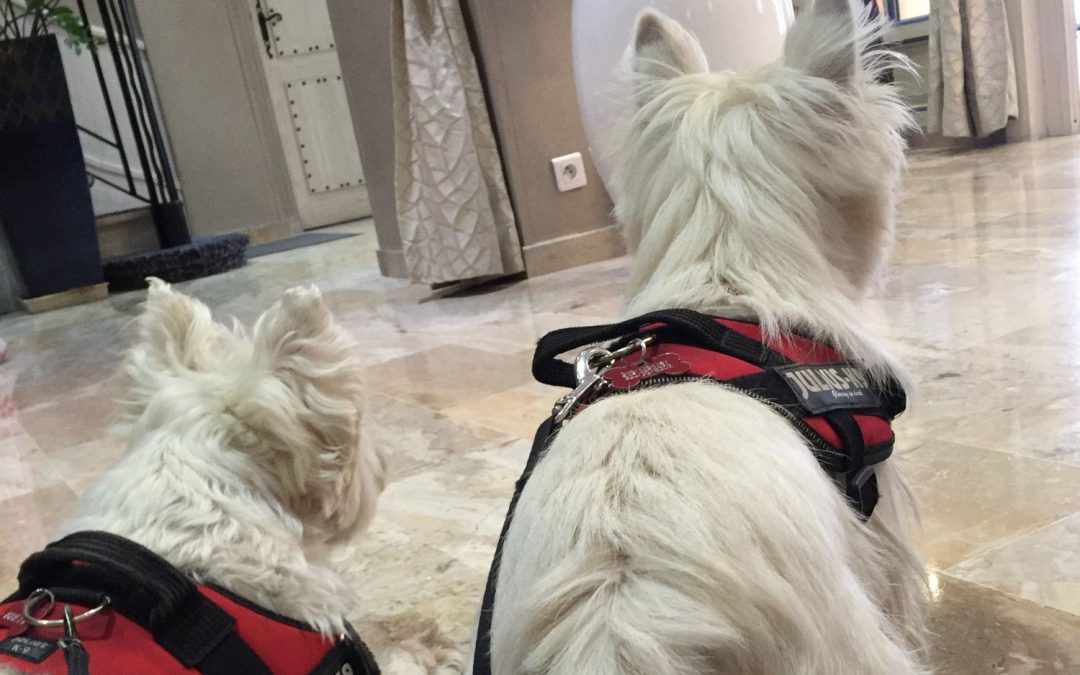 Cani Star di Instagram: i segreti che rendono i loro profili migliori del tuo